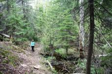 big-woods-hiking-trail-768x512